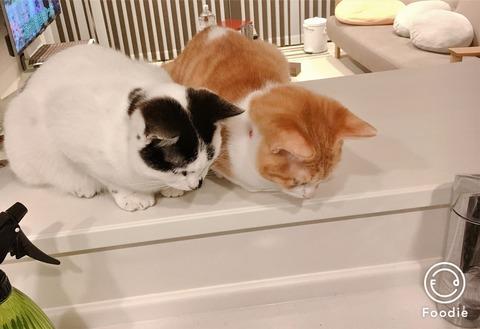猫シンクロ中