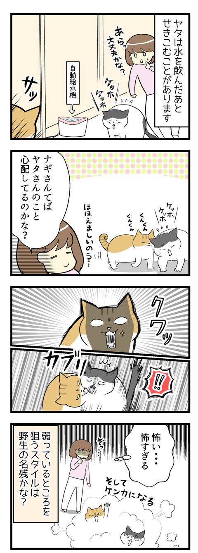 猫のヤタは水を飲んだあとせきこむことがあります。そうしているとヤタの近くに寄ってくる猫のナギ。心配しているのかな?と思いきや、ナギがヤタの喉元をガブリ!そしてケンカに発展。弱っているところを狙っていくスタイルなのかな?