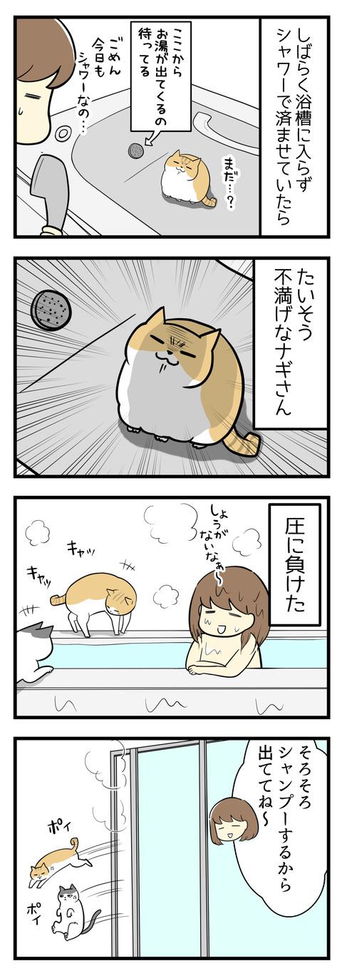 ここしばらく浴槽には入らずシャワーで済ませていたら、浴槽大好きなナギがたいそう不満げでした。圧に負けて久しぶりに浴槽にお湯をはりました。でシャンプータイムになったので猫たちは浴室の外に出てもらったところ