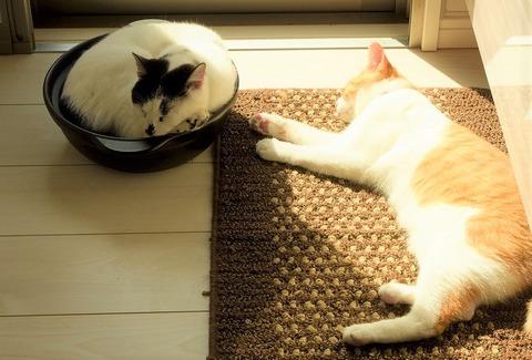 猫なべの画像