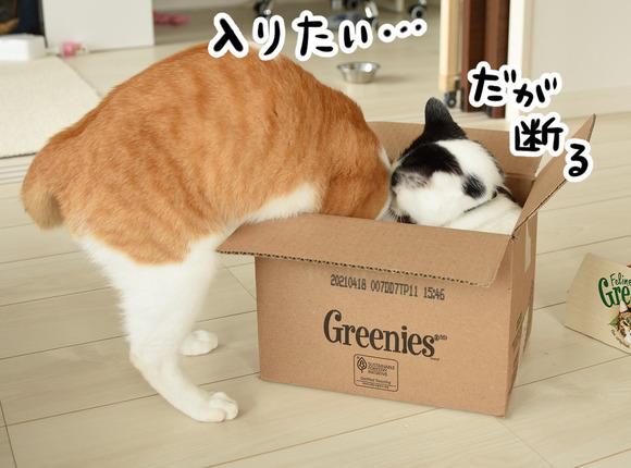 入りたい猫と拒否する猫1