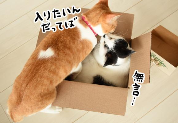 入りたい猫と拒否する猫2