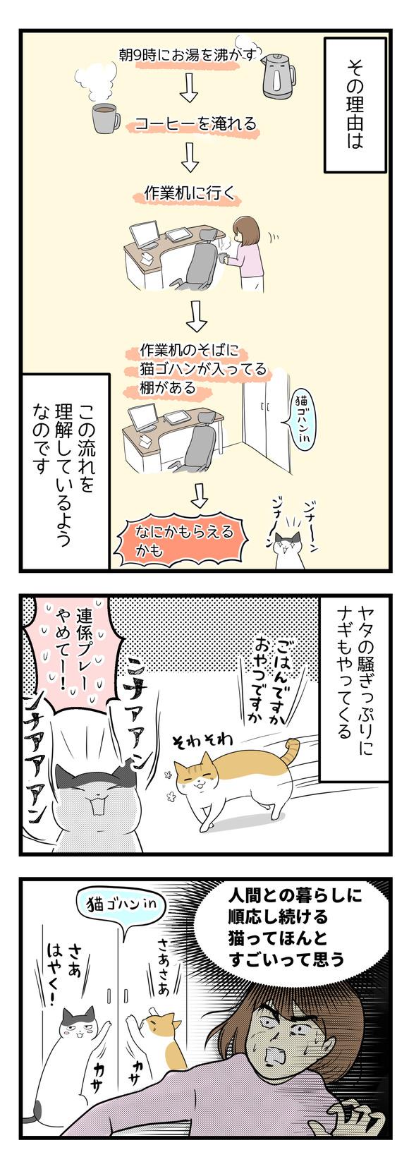 猫の順応性に驚く話-2-