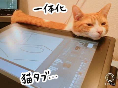 液晶タブレットと猫のナギ