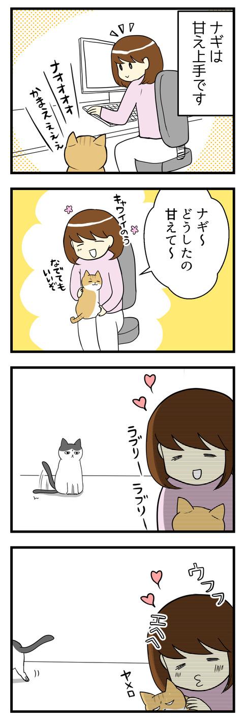 猫のナギは甘え上手で膝に乗ってきます