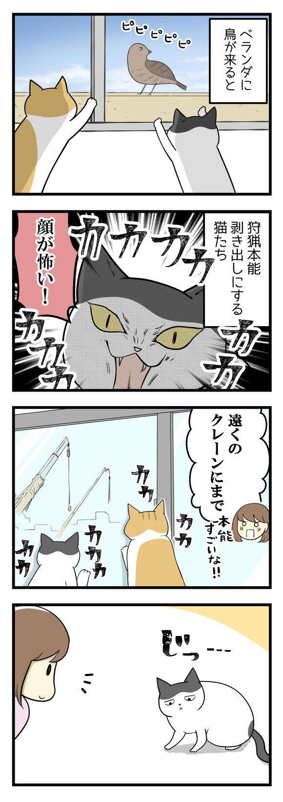 猫の本能がよくわからない!-1-