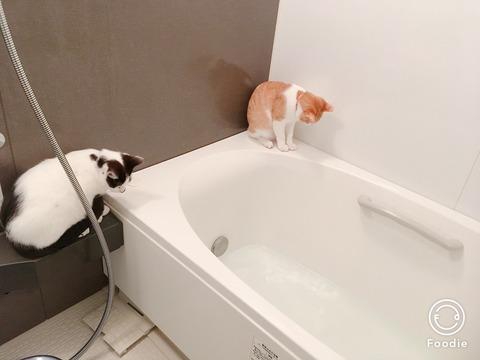浴槽を見守るねこ
