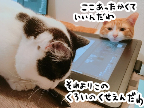 液晶タブレットと猫たち