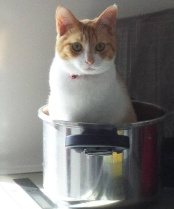 猫なべアップ