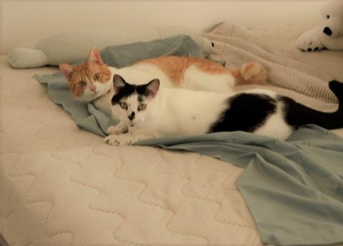 布団乾燥機と猫さん