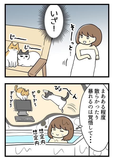 いざ!!とチャレンジスタート。ある程度部屋が散らかったり猫たちが暴れたりするのは覚悟しておくものの、やっぱり心配・・・結局20分くらいで慌ててお風呂から出ると、猫たちはこたつでぐっすり寝ていました。こたつは偉大!!