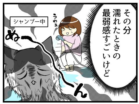 猫の抜け毛でギャップ漫画続き2