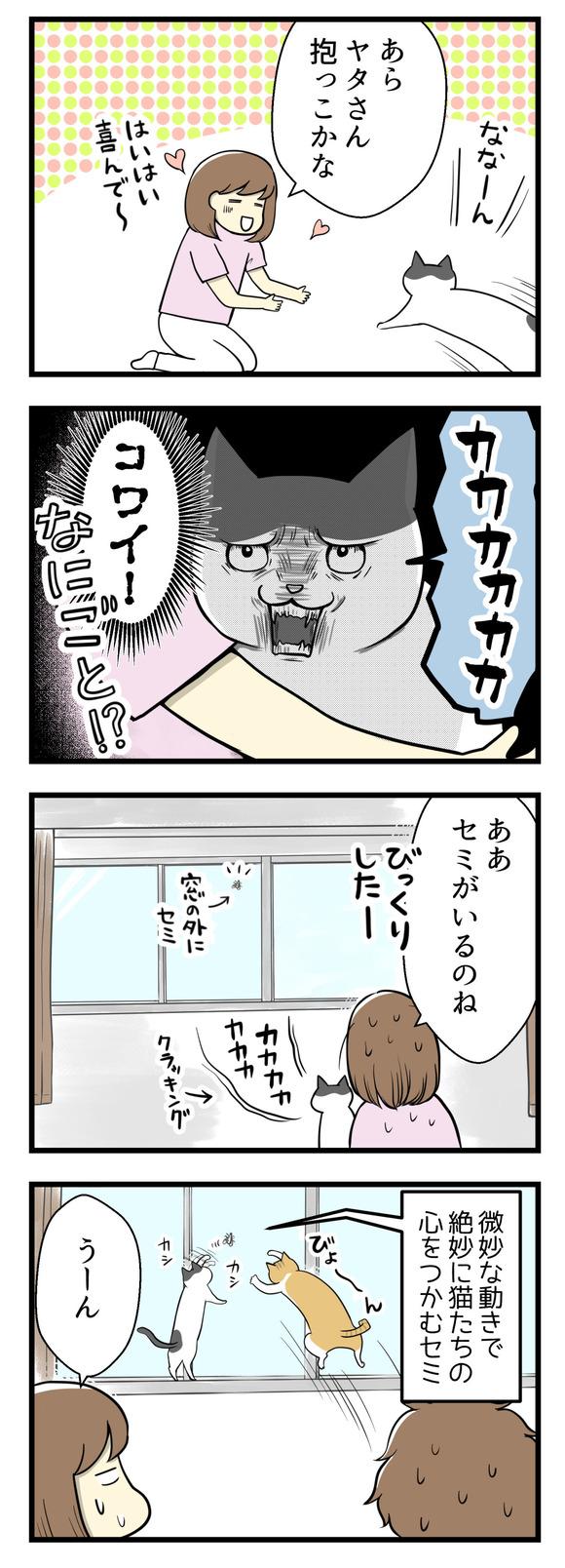 猫のヤタさんを抱っこしていたら急にカカカカ!とクラッキングが始まってびっくり。気づくと窓にセミが張り付いていました。絶妙な動きで猫たちの心をつかむセミ。