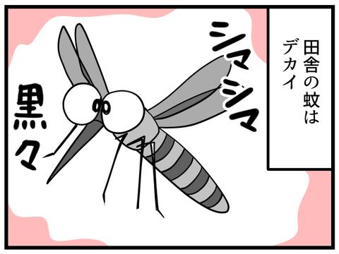 田舎の蚊_1