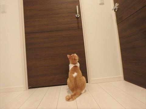 ドアを見つめるナギ