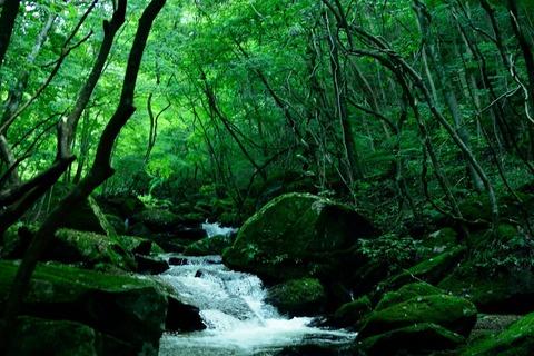 滝川渓谷の渓流沿い