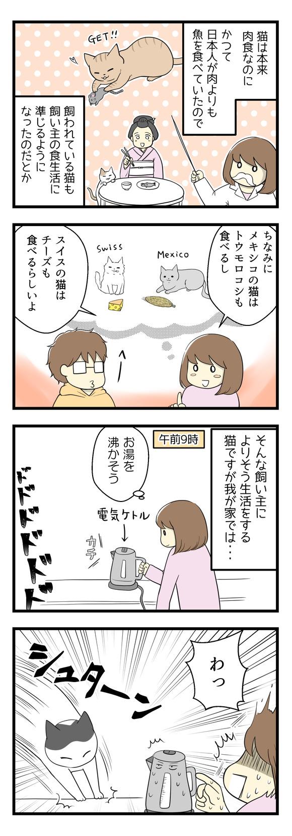 猫の順応性に驚く話-1-