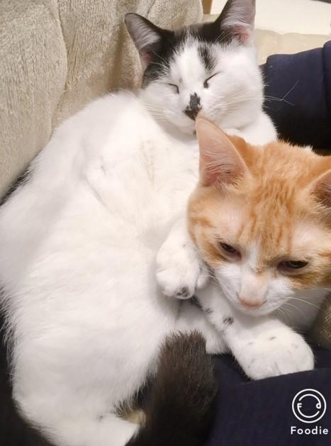 猫の毛もふもふ画像