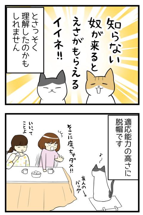 猫たちは、「知らない人が来るとえさやおやつがたくさんもらえるかも」ということを理解したのかもしれません☆適応能力高いな!