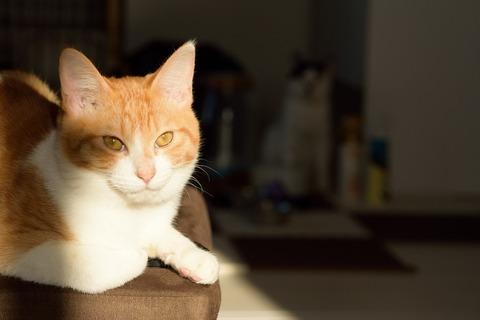 キリッときめる猫の画像