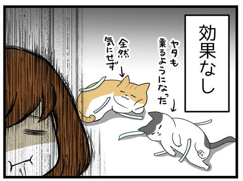 ぜんぜん猫はテープをワナと認識せず意に介していない様子