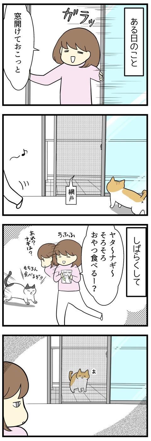ある日、空気を入れ替えようと窓を開けておきました。しばらくして猫たちにおやつをあげようとしたら、猫のナギがベランダに出ているところを目撃!!