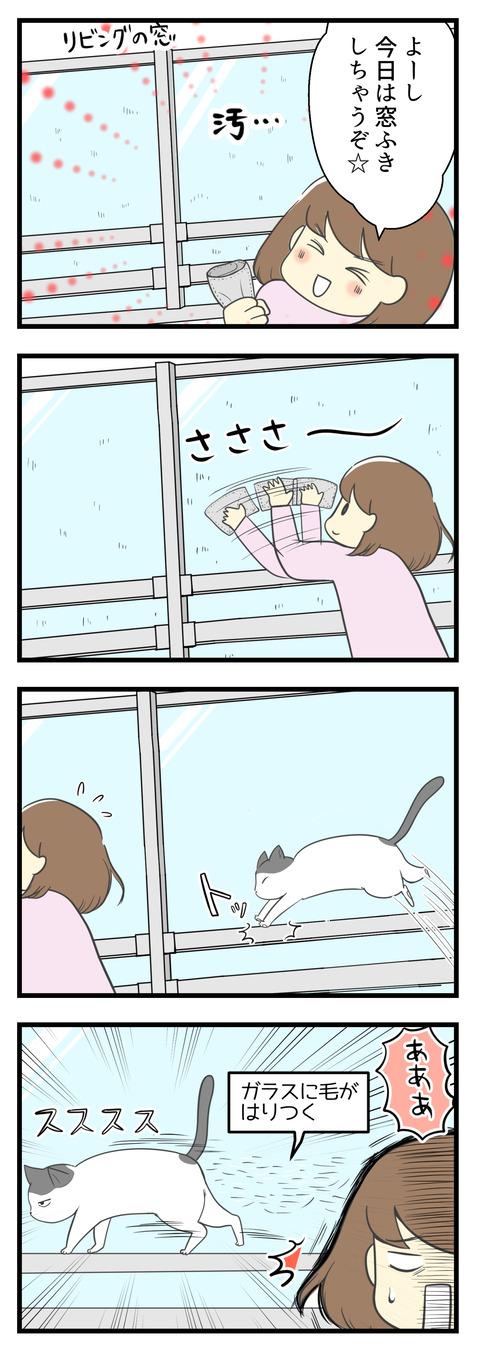 新型コロナの影響で外出控えが続く中、家の窓ふきをしました!せっせと窓をふいていると猫のヤタがやってきて湿った窓にファーと抜け毛が付着!