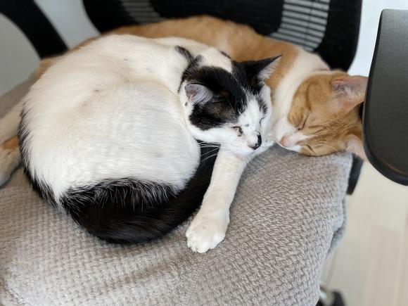 くっつく猫たち