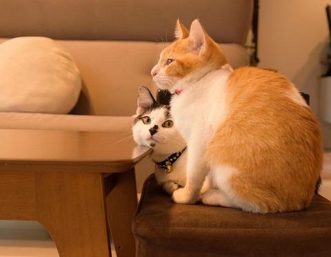 おすましヤタとナギ(猫)