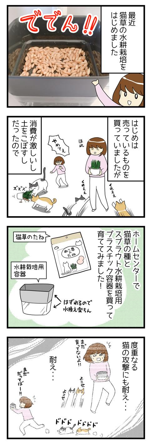 はじめは猫草を普通に購入していましたが、土をこぼすし消費が激しいので猫草の種を買って水耕栽培にチャレンジしてみました