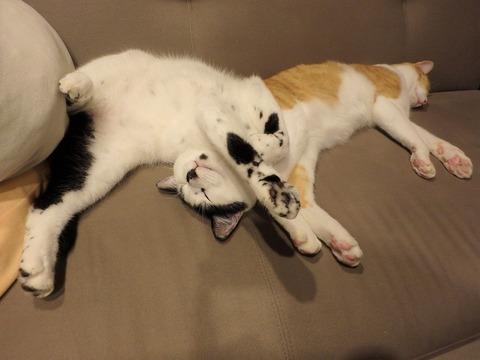 現在の猫たち