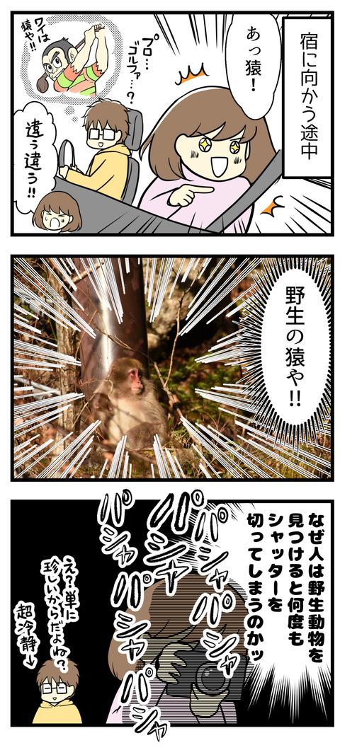 宿へ向かう途中、野生の猿を発見!めちゃめちゃ撮影しまくりました!