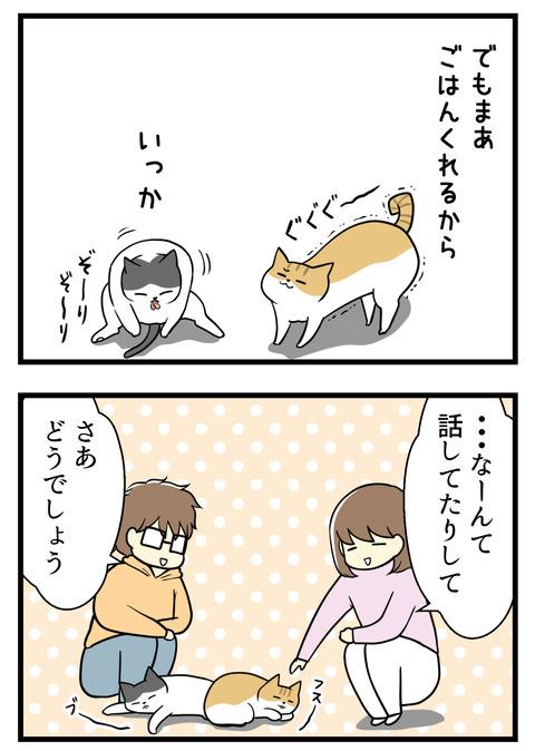 まあでもごはんくれるしな。いっか。・・・なーんて猫同士で話してたりして。