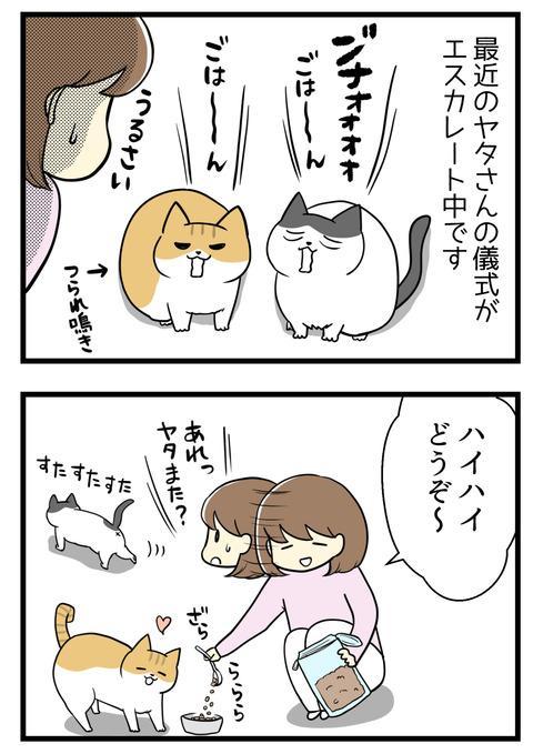 猫の儀式エスカレート中。ご飯を欲しがるのであげようとすると、猫のヤタがそっと姿を消します。