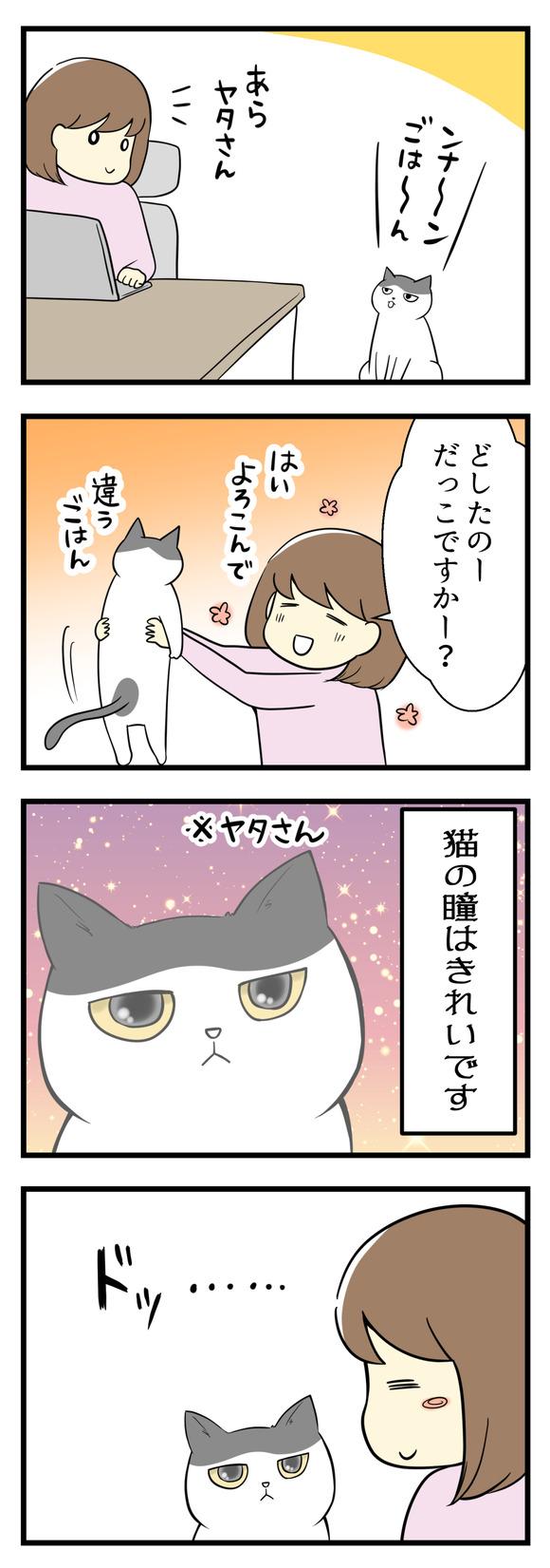 猫のヤタさんが近くに来ました。抱っこして近くで見て実感する、猫の瞳のきれいさ!この瞳を見ていると・・・・・・