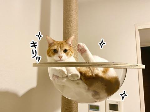 猫のキメ顔