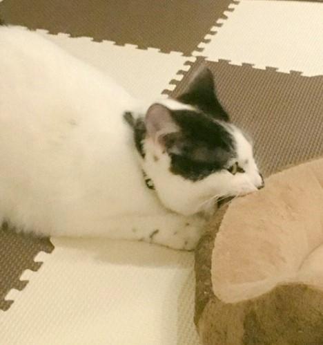 ハンター猫の画像