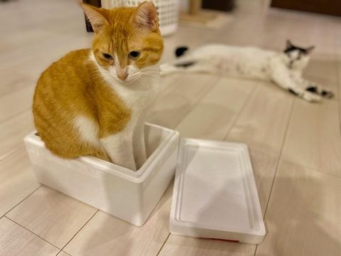背後から狙う猫