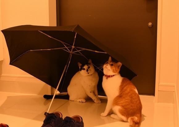 外の雨音にビビる猫たち