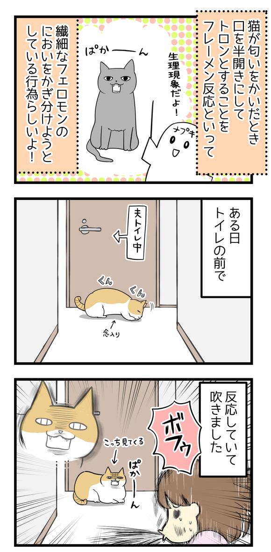 猫が匂いをかいだとき目をトロンとさせて動きが止まることをフレーメン反応といって、繊細なフェロモンの臭いをかぎ分けようとしているらしいよ!ある日夫がトイレに入っているとき、トイレの前で猫のナギさんがフレーメン反応を見せたとき思わず吹きました。