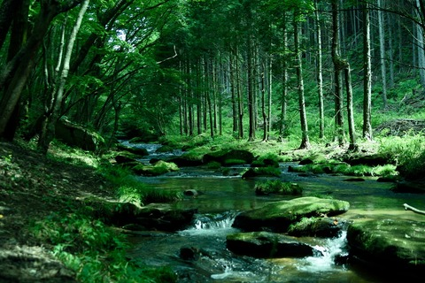 滝川渓谷の穏やかな渓流