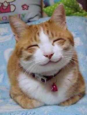 口内炎の治し方は、よく笑うこと