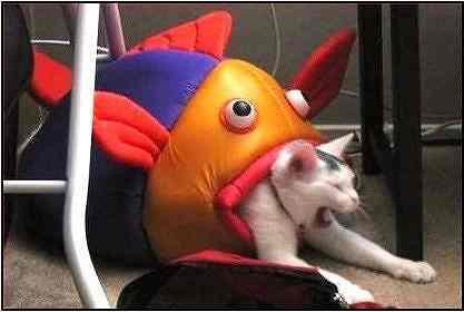 猫や犬の口内炎の原因、骨
