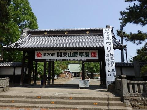 関東山野草とこいのぼり 010