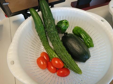 7.12採れたて野菜