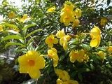 taipei-flower-1-20170718
