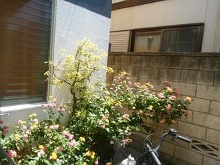 シェアハウスの草花