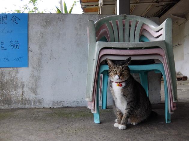 年末年始の台湾(台北)旅行3日目 ~猴硐の猫村で猫とたわむれ、十分でランタンを飛ばし、九份で千と千尋の神隠し的な人混みに消耗したよ~