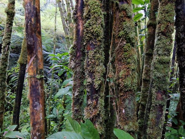 道中はジャングル気味でマイナスイオンを感じます