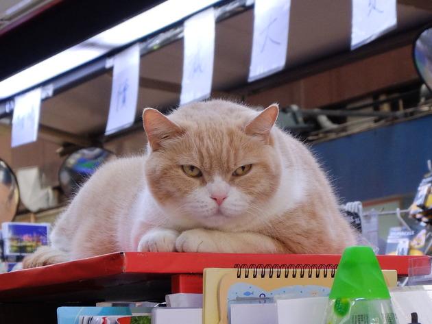 香港・マカオ旅行5日目 ~最終日も食べてばかり!引退直前のクリームあにきを見てきたよ!~